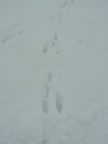 雪の日_c0222316_20352159.jpg