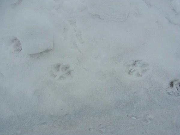 雪の日_c0222316_20362377.jpg