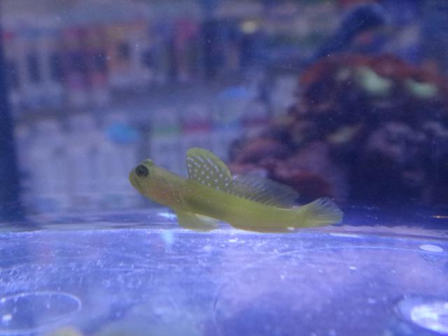 120215 海水魚・水草・淡水魚_f0189122_131346.jpg