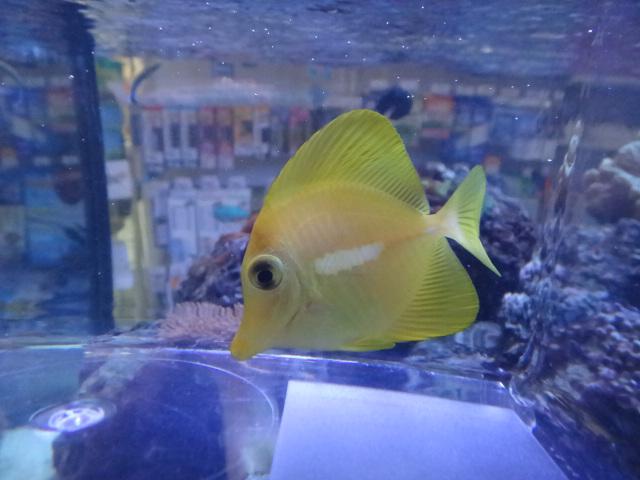 120215 海水魚・水草・淡水魚_f0189122_1394426.jpg