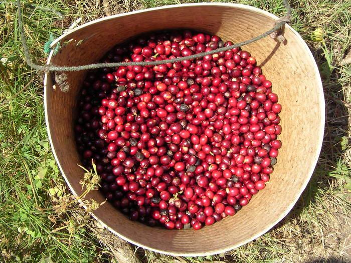 良質のコーヒーはフルーツの味?_a0143042_1394419.jpg