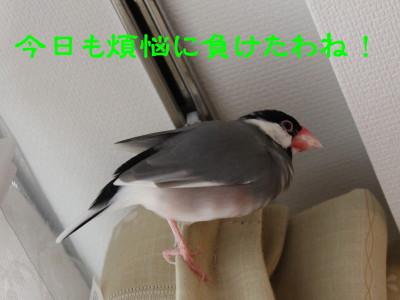 b0158061_220844.jpg