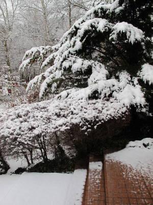 重たい雪_a0129867_10252983.jpg
