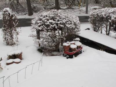 重たい雪_a0129867_10254754.jpg