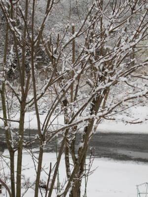 重たい雪_a0129867_10255950.jpg