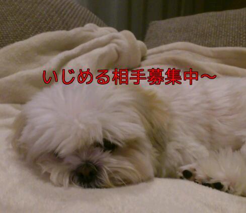 b0237894_1334516.jpg