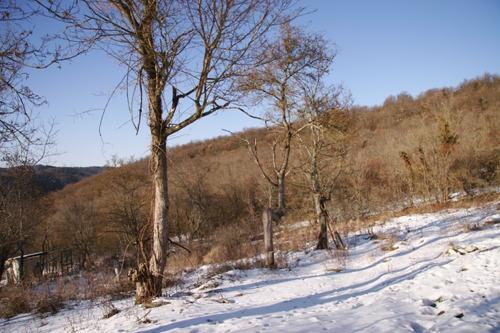 雪の下にはパン~2月の畑_f0106597_22451187.jpg
