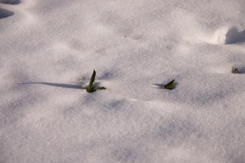 雪の下にはパン~2月の畑_f0106597_2249834.jpg