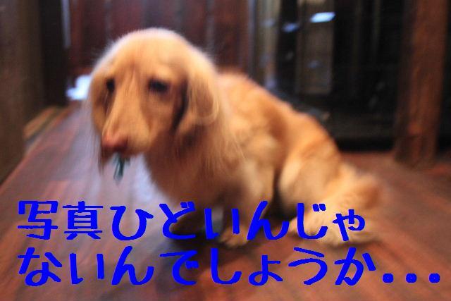 b0130018_21312216.jpg