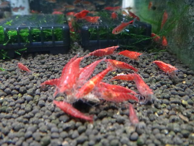 120216 熱帯魚・水草・金魚_f0189122_13103764.jpg