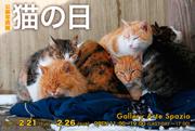 公募写真展「猫の日」と写真講座仲間の写真展_d0096837_12352015.jpg