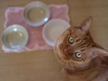 オーカッツフードボウル食器猫 しぇる編。_a0143140_21423555.jpg
