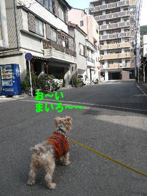 d0013645_1758027.jpg