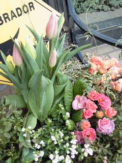 The Garden!  Vol.2_a0229658_16215997.jpg