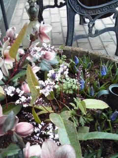 The Garden!  Vol.2_a0229658_16353981.jpg