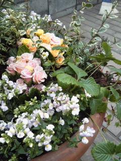 The Garden!  Vol.2_a0229658_16423232.jpg