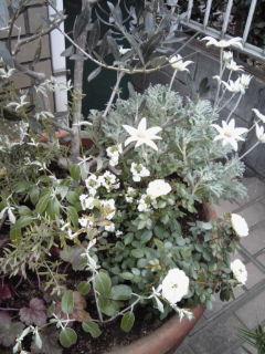 The Garden!  Vol.2_a0229658_16535234.jpg