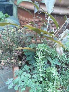 The Garden!  Vol.2_a0229658_1795010.jpg