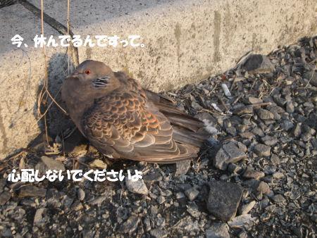 f0143123_2054880.jpg
