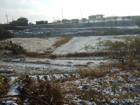 梅や桜の開花時期に....突然雪が!_b0137932_23331582.jpg