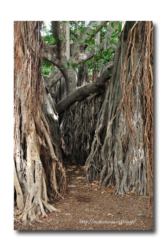さかなや家族 旅行 in Hawaii 〜 3日目 〜 Honolulu Zoo_d0069838_10251612.jpg