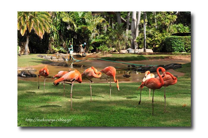 さかなや家族 旅行 in Hawaii 〜 3日目 〜 Honolulu Zoo_d0069838_10261569.jpg