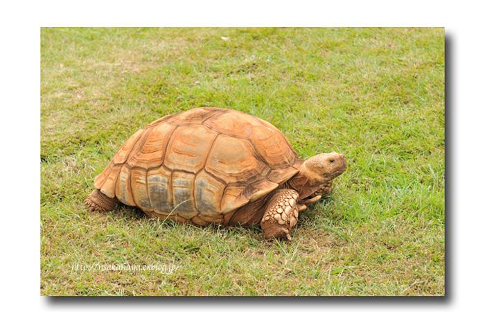 さかなや家族 旅行 in Hawaii 〜 3日目 〜 Honolulu Zoo_d0069838_10294240.jpg
