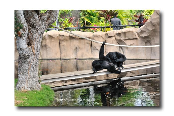 さかなや家族 旅行 in Hawaii 〜 3日目 〜 Honolulu Zoo_d0069838_10302073.jpg