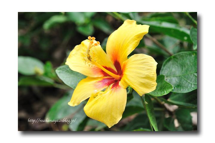 さかなや家族 旅行 in Hawaii 〜 3日目 〜 Honolulu Zoo_d0069838_10321853.jpg