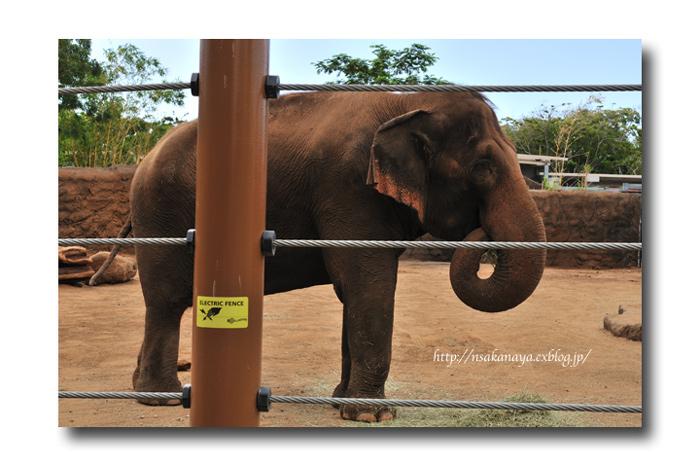 さかなや家族 旅行 in Hawaii 〜 3日目 〜 Honolulu Zoo_d0069838_10341123.jpg