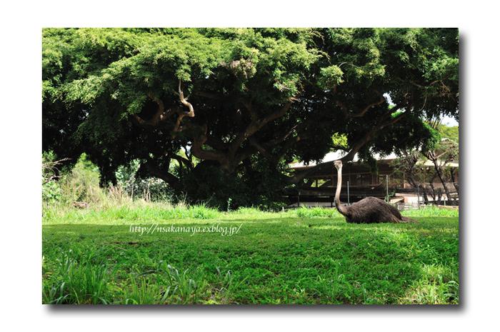 さかなや家族 旅行 in Hawaii 〜 3日目 〜 Honolulu Zoo_d0069838_10345073.jpg