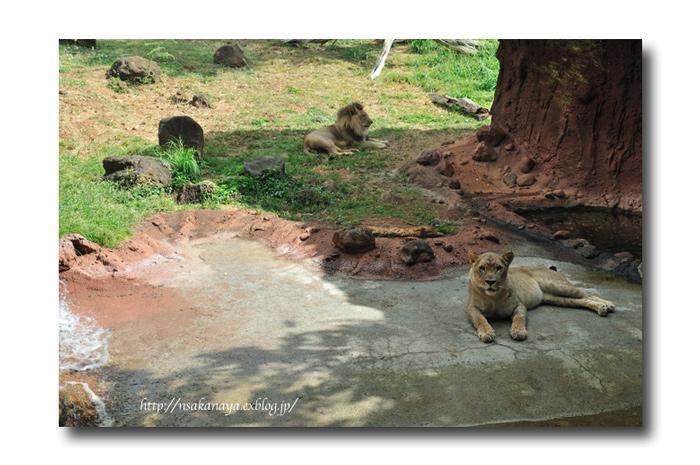 さかなや家族 旅行 in Hawaii 〜 3日目 〜 Honolulu Zoo_d0069838_10353191.jpg