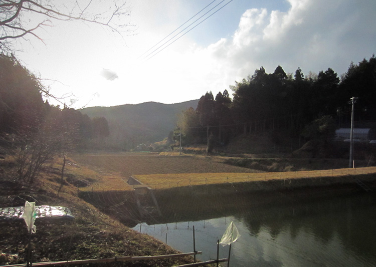 寒さの中の春_d0231263_23171255.jpg
