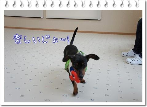 【わんこと一緒】室内ドッグランWANDRY@土浦_a0091865_10482964.jpg