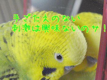 f0196665_2236407.jpg