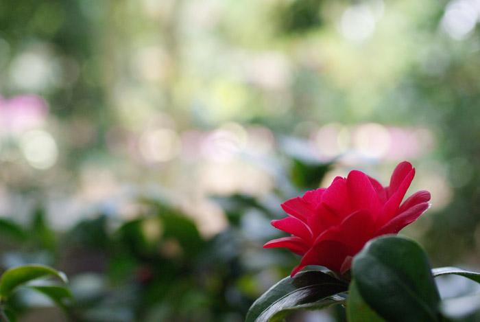 春を待つ丸ボケw_b0103798_212829100.jpg