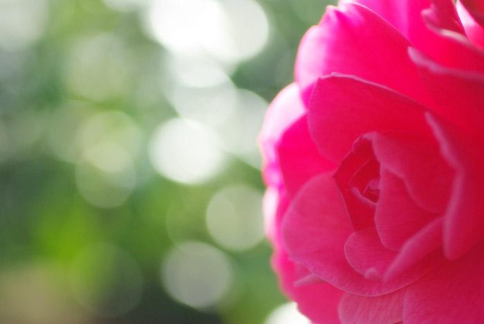 春を待つ丸ボケw_b0103798_2128681.jpg