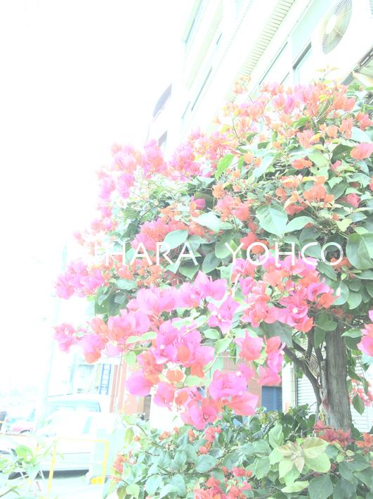 台湾Second day〜彰化〜_b0025511_1758749.jpg