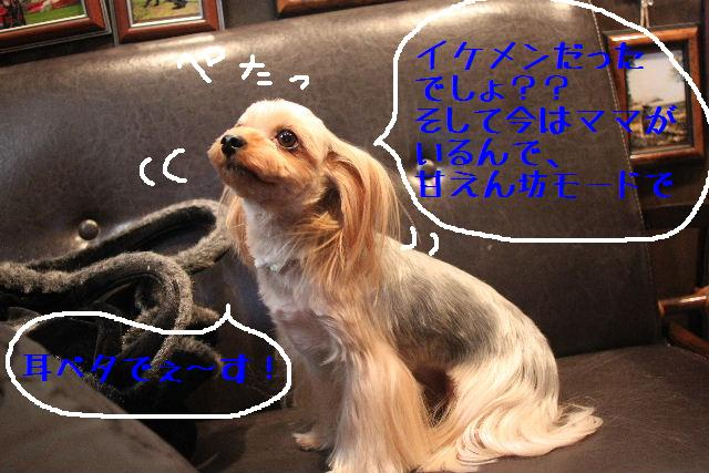 b0130018_1658336.jpg