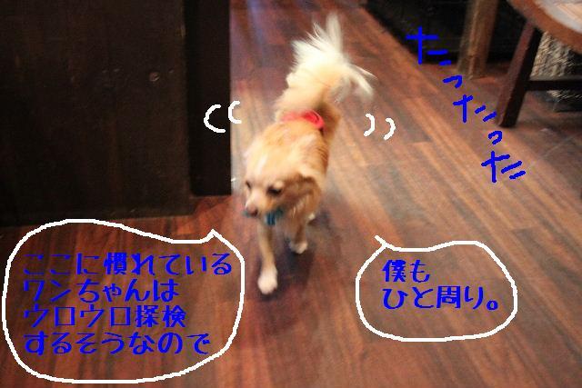 b0130018_1782410.jpg
