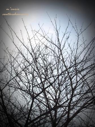 雪空_c0232619_17183567.jpg