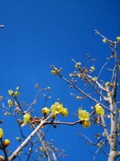 春間近_b0100229_1542824.jpg