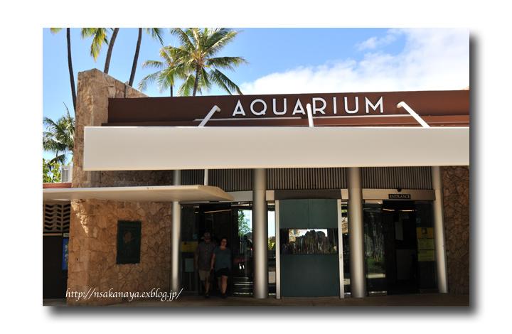 さかなや家族 旅行 in Hawaii 〜 3日目 〜 Waikiki Aquarium_d0069838_915627.jpg