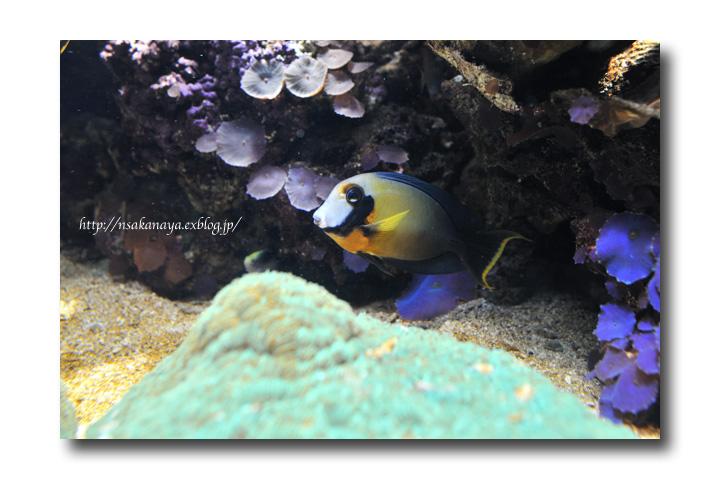 さかなや家族 旅行 in Hawaii 〜 3日目 〜 Waikiki Aquarium_d0069838_9173071.jpg