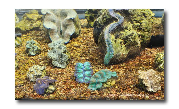 さかなや家族 旅行 in Hawaii 〜 3日目 〜 Waikiki Aquarium_d0069838_9182288.jpg