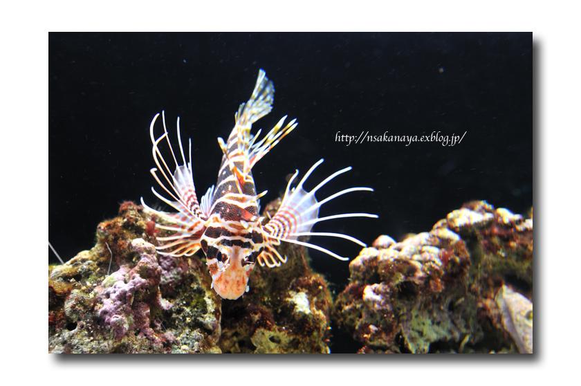 さかなや家族 旅行 in Hawaii 〜 3日目 〜 Waikiki Aquarium_d0069838_9194194.jpg