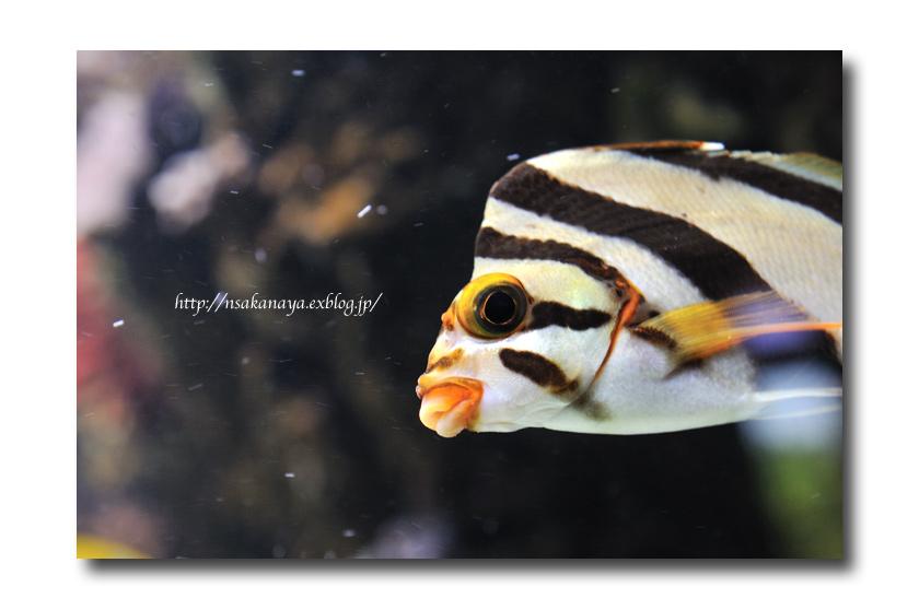 さかなや家族 旅行 in Hawaii 〜 3日目 〜 Waikiki Aquarium_d0069838_920291.jpg
