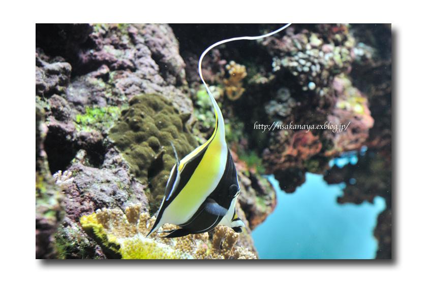 さかなや家族 旅行 in Hawaii 〜 3日目 〜 Waikiki Aquarium_d0069838_9211965.jpg