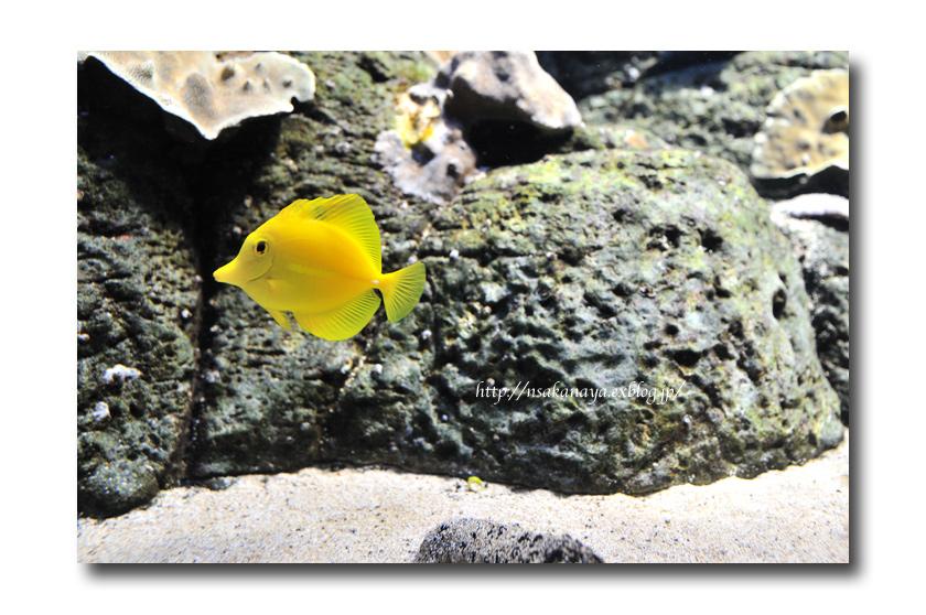 さかなや家族 旅行 in Hawaii 〜 3日目 〜 Waikiki Aquarium_d0069838_994888.jpg