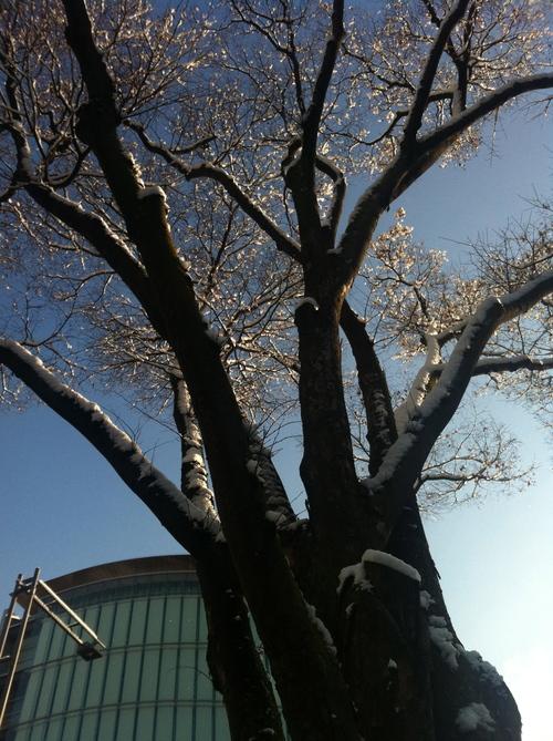 雪化粧。_e0170538_16352180.jpg